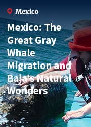 Mexico: The Great Gray Whale Migration and Baja's Natural Wonders
